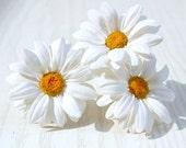 Daisy white Hair Pin  - Flower hair accessories - Chamomile - Rustic Hair pins- Flower hair pin