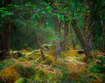 Ancient Forest Landscape of Milford Track, New Zealand.   Fine Art Photography by Roy Hsu