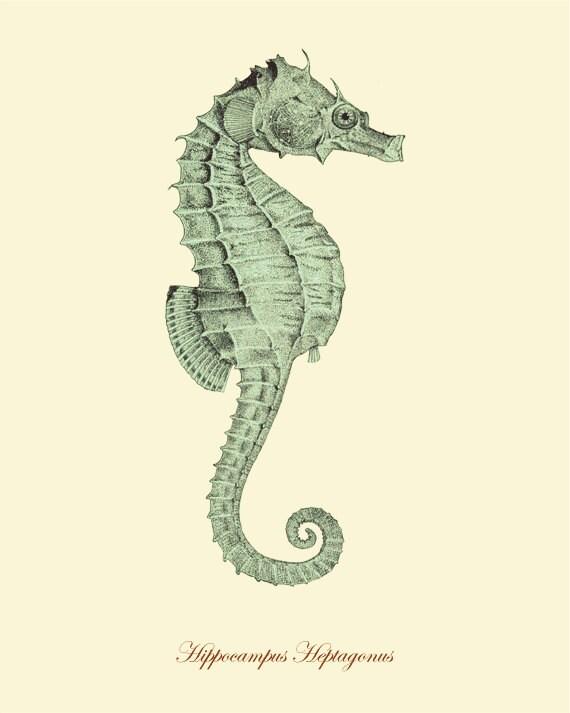 Seahorse art print Vin...