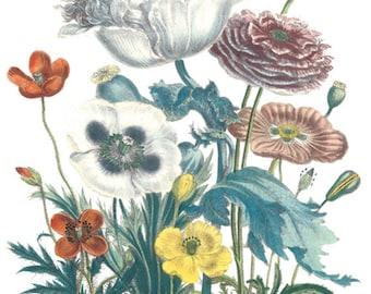 Botanical Image- No.LG-3370