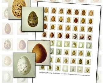 Antique Egg Print Scrabble sheet 19mm x 21mm .75 x .83 inch digital collage sheet Bird eggs