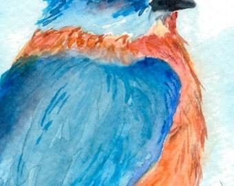 Bluebird ACEO Print From Origianl Watercolor, Artist ACEO, Watercolor ACEO Bluebird Print,