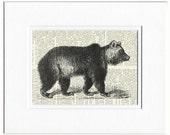 bear dictionary page print