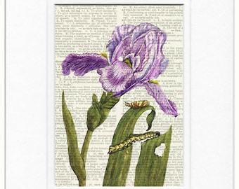 Iris dictionary print