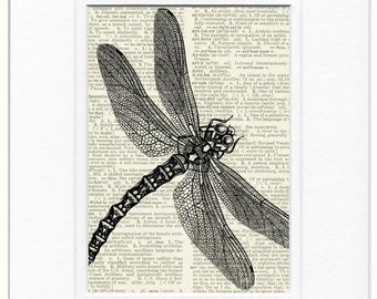 dragonfly dictionary page print