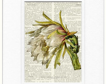 Cactus flower dictionary page print