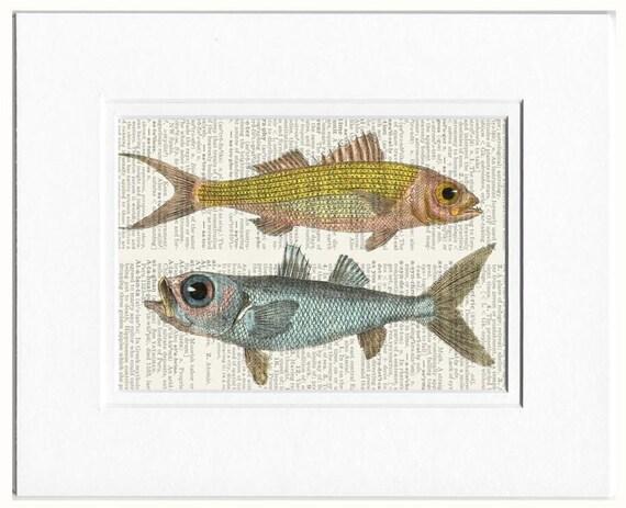 fish print, ruby snapper & bulls eye