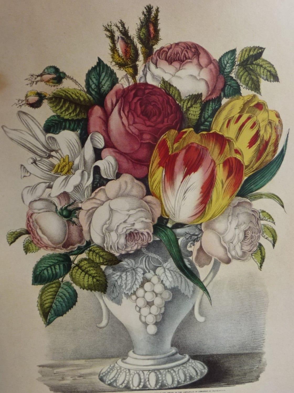 Currier Amp Ives Botanical Illustration Vase Of By Angelgrace
