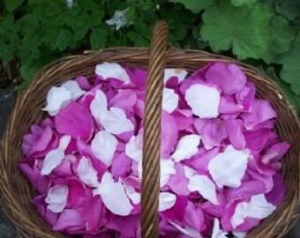 Pure Rose Essential Oil - Rosa Damascena - Undiluted Therapeutic Grade