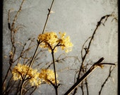 Fleurs Melancoliques - Fine art Print - Nature Photography - For Tree Lovers - Etsy Wall Art - TFTeam