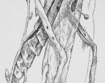 Original Book Illustration - Locust Skeleton