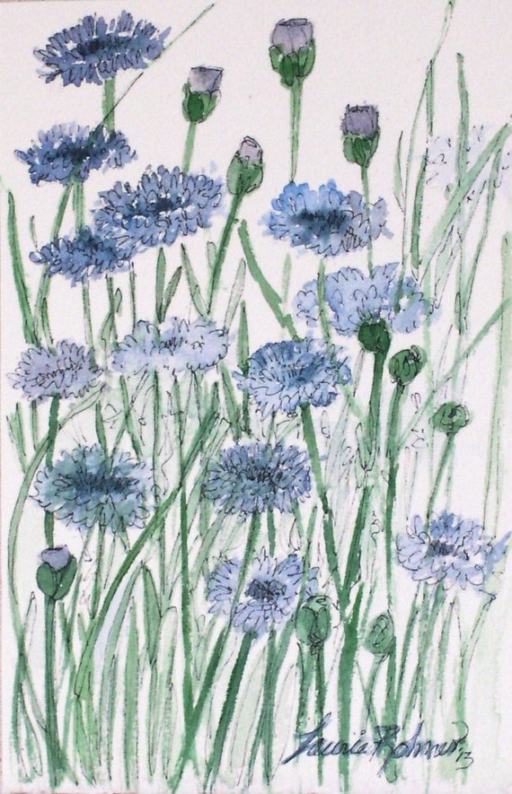 Garden Nature Art Watercolor Blue Flower Scabiosis Original Painting Laurie Rohner