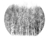 Nature Photograph, Winter Woodland, 12x12 Fine Art Photography Print, White, Brown, Snow, Circle - TheShutterbugEye