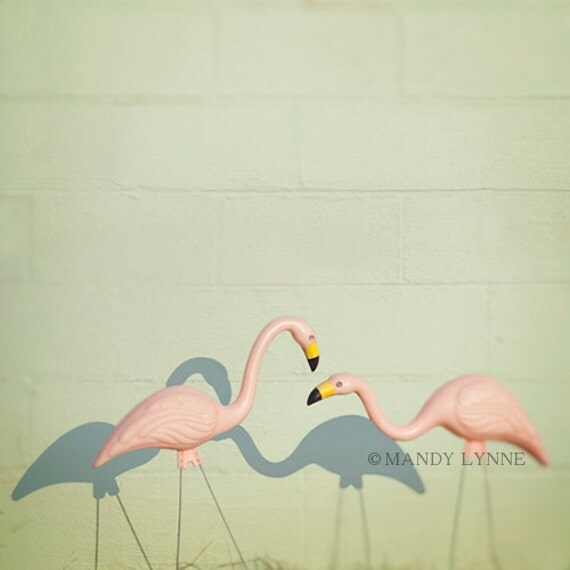 Happy together  - flamingo print