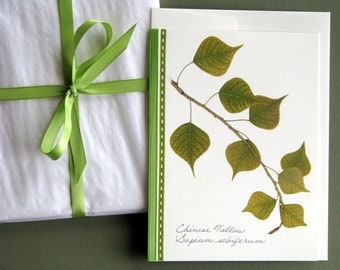 Chinese Tallow leaves, fresh spring leaves, lime green, greeting card, no.1159