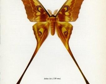 Vintage Moth Print, (73) Doubleday, Prochazka, 1966, Butterfly, Lepidoptera, Natural History, Frameable Art