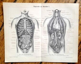 1894 HUMAN ORGANS lithograph -  entrails innards antique anatomy print original lithograph
