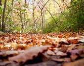 Woodland Photography earth day brown sunlight view leaves path fall october look upward fallen wooden hike Worm's eye - fine art