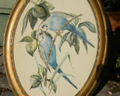 Vintage Pair of Blue Parakeets by E. Serton