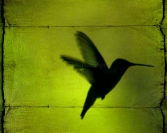 Peridot Chartruese Absinthe Green hummingbird behind the blinds on Neon Green giclee 12x12 fine art print