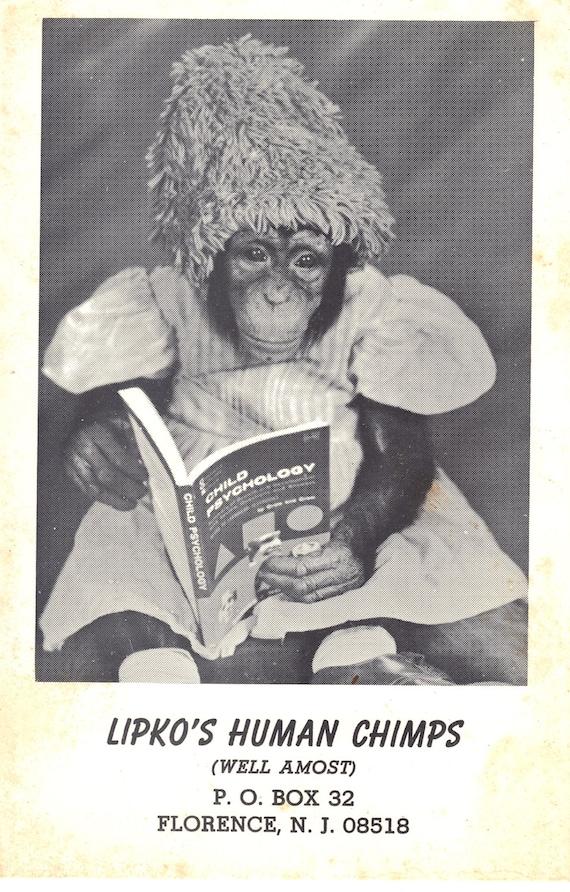 Lipko's Human Chimps Vintage Postcard - Comedy - Circus Memorabilia