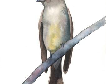 Fly Catcher Painting - bird art nature wildlife art - Print of watercolor painting - 5 by 7 print, bird art, wall art, home decor