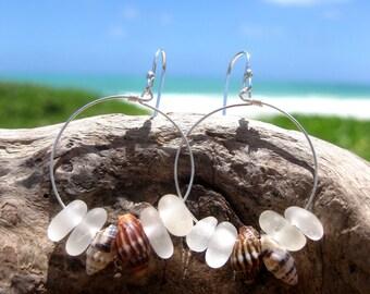 Hawaiian Clear Beach Glass Surrounding 2 Pairs Matching Small Hawaiian Tidal Shells on 925 Sterling Silver Circular Wire Small Hoop Earrings