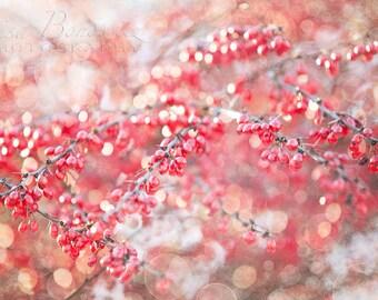Wonder Berries - Red Winter Berries Fine Art Photo Print -Nature Photography - Christmas Decor