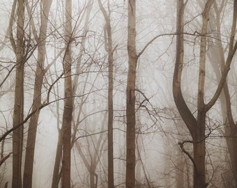 Fog in Forest - Nature Photography - Surreal Dreamy Forest Trees Mist Fog Wall Art - Photograph 20x30