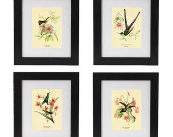 Hummingbird Posters, Hummingbird Art Print Set, Botanical Art, Botanical Prints, Wall Art, Bird Prints, Botanical Wall Art