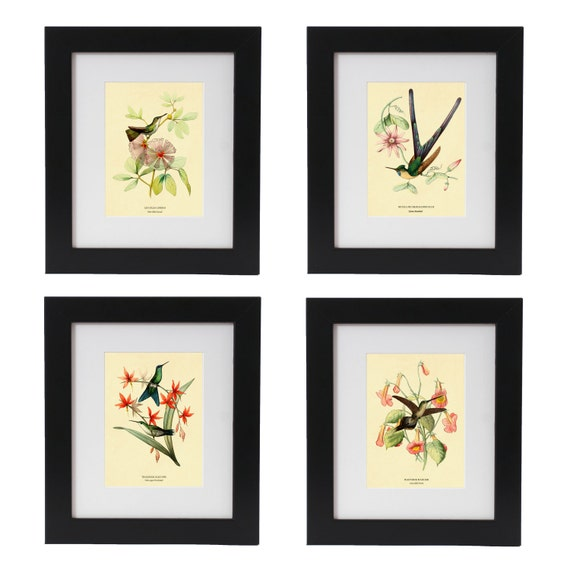 Hummingbird Print Set, Hummingbird Art, Botanical Art, Botanical Prints, Wall Art, Bird Prints, Botanical Wall Art