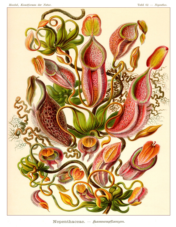 Popular items for botanical art on Etsy