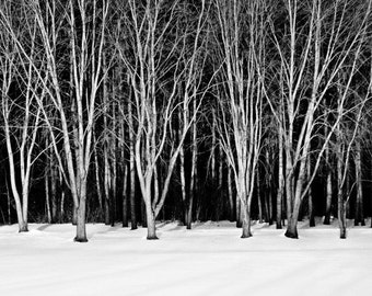 Winter Trees - Rustic Wall Art - Winter Print - Nature Photography - Home Decor - Black & White - 8x10