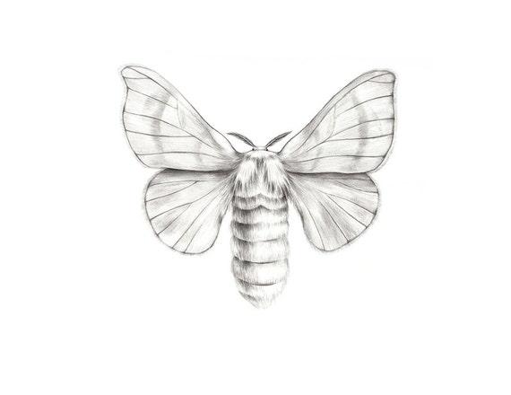 Moth drawing - photo#22