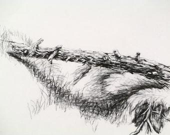 fallen tree log bridge bark art print 8 x 12 of original charcoal drawing