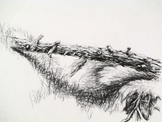 Tree Log Drawing Fallen Tree Log Bridge Bark
