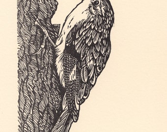 "Block Print ""Brown Creeper"" black ink."