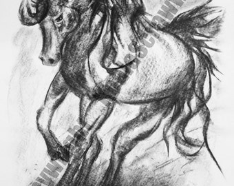 Mounted A4 print of original charcoal expression of horse  attitudes from the 'Equus' range - Titled 'Collection'