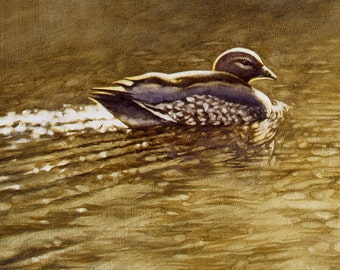 Australian Wood Duck painting - wildlife art - nature, limited edition print