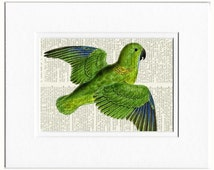 18oo's parakeet book page print