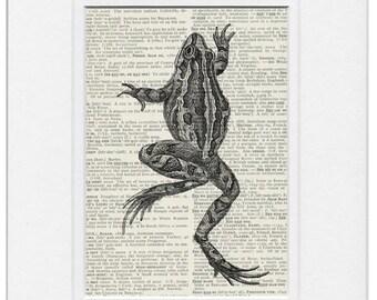 Frog print I