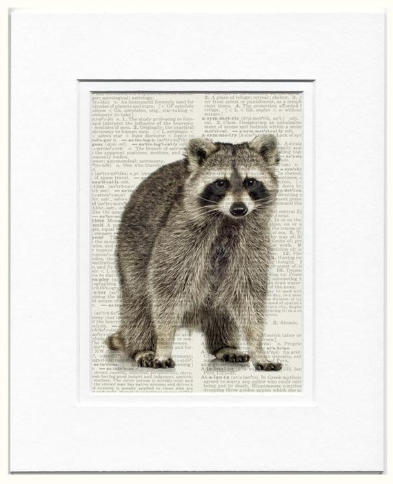 raccoon photo on book page