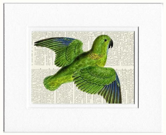 18oo's parakeet book page print