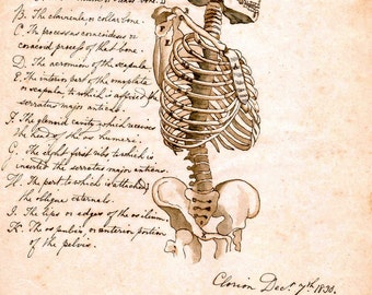 Anatomy print  skeleton writing anthropology medical print goth dark art