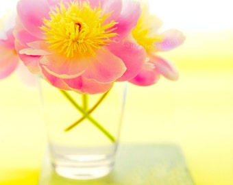 Pink Peony on Yellow Flower Nature
