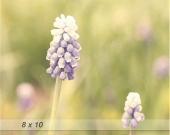 Soft Purple Flower Photo Download, Spring Wall Decor, Summer, nature, 8x10 or 11x14, digital download