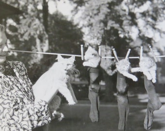 Vintage 1930's Three Kittens On The Clothes Line And Momma's Not Happy Snapshot Photograph - Free Shipping
