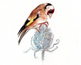Original 8x10 Watercolour European Goldfinch.. NOT A PRINT ..Original Painting gold bird