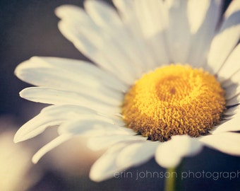 flower photography, white home decor, yellow decor, nature photography, macro wall art, spring decor, daisy photography, white flower