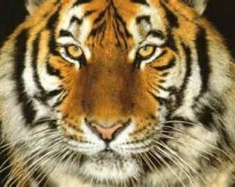 Tiger Cross Stitch Pattern PDF